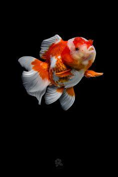 Broken Soul Quotes, Lightroom, Photoshop, Fish Breeding, Aquariums, Goldfish, Animals Beautiful, Horses, Terrariums