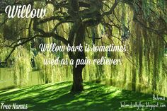 Beloved Baby Names: Tree Names Awesome Names, Cool Names, Nature Names, Unisex Name, Willow Bark, Story Inspiration, Baby Names, Words, Dog