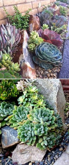 For those people who living in dry areas, having a beautiful and easy-to-maintain garden is not an easy task. Fortunately, you can create succulent landscapes for your garden. Succulents are definitely popular and trendy in garden landscaping at the moment. They can tolerate dry conditions, low levels of water and high temperatures, so succulent plants […]...