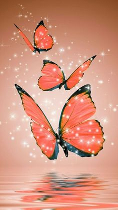 Compiled with dozens of wallpapers of butterfly to put on your mobile screen. If you like the butterfly you will love all the pictures we will show. Butterfly Wallpaper Iphone, Cellphone Wallpaper, Galaxy Wallpaper, Flower Wallpaper, Mobile Wallpaper, Wallpaper Backgrounds, Iphone Wallpaper, Butterfly Pictures, Butterfly Flowers