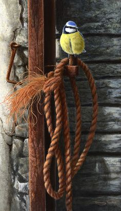 old rope blue tit by Jeremy Paul