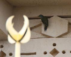 Birdwatching, Grey, Gray, Birds