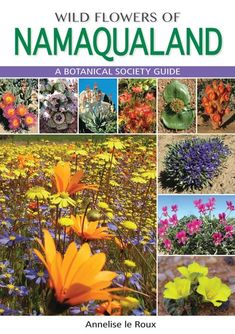 """Read """"Wild Flowers of Namaqualand A Botanical Society guide"""" by Annelise le Roux available from Rakuten Kobo. Namaqualand is justifiably famous for the floral wonderland it becomes in spring, when seas of bright flowers carpet the. Dry Garden, Garden Plants, Home And Garden, Bright Flowers, White Flowers, Dwarf Shrubs, Succulents, Floral, Seas"""