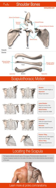 Really nice explaination of shoulder anatomy. Great stuff from Proko.