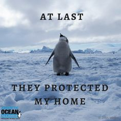 At last! The Ross Sea is protected.