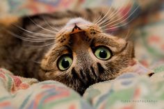 Fleya on www.yummypets.com Cat, kitten, kitty, meow, purr, animals, pets, pussycat, Yummypets