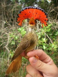 insolite crete oiseau rouge