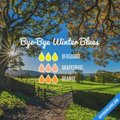 Bye-Bye Winter Blues - Essential Oil Diffuser Blend by lenora Buy Essential Oils, Essential Oil Diffuser Blends, Young Living Oils, Young Living Essential Oils, Perfume, Bye Bye, Diffuser Recipes, Remedies, Easential Oils
