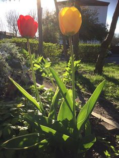 Zahra Alijah @zahra_infinity  ·  Apr 14  ·  #MossSide Peace Garden is blooming lovey