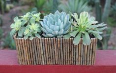 """$23 for planter with 3 4"""" plants and shipping"""