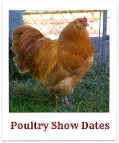 Find all the poultry show dates!