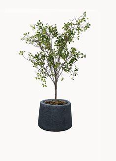 家居仿真树 Planter Pots