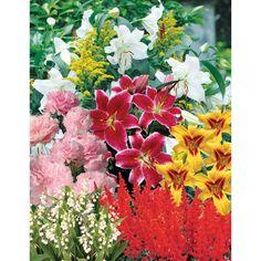 Perfumed Delight Perennial Garden from costco