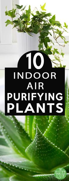 10 Best Plants to Purify and Lower Stress - Garden Lovin