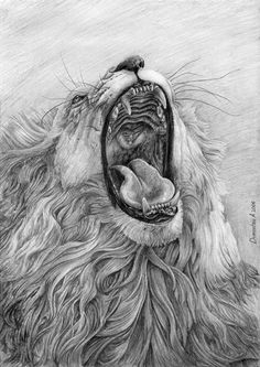 Lion's Mouth -10  Cool Lion Drawings for Inspiration, http://hative.com/lion-drawings/,