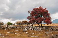 coming fall - the plain in natural area near some small village at autumn natural view