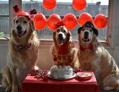 Brie & Ben celebrating Valentine's Day with friend Cooper