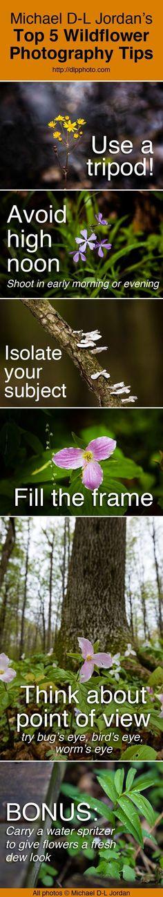 wildflower photo tips by Michael D-L Jordan Nature Photography Tips, Photography Basics, Photography Lessons, Camera Photography, Photography Tutorials, Digital Photography, Landscape Photography, Headshot Photography, Inspiring Photography