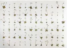 Pattern by Herman De Vries
