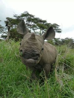 Hello.....I am a Rhinoceros and I am critically endangered, likely to disappear from the earth within YOUR generation. I matter......