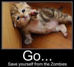 i couldnt let the #zombies get this #cute little #kitten #funny stuff joeostigny