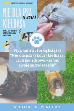"""O kociej dietetyce rozmawiałam ze zwierzęcą dietetyczką Agnieszką Cholewiak-Góralczyk, założycielką Surowe Kotki i Psy oraz autorką książki """"Nie dla psa (i kota) kiełbasa, czyli jak zdrowo karmić swojego zwierzaka"""". Psy, Author"""