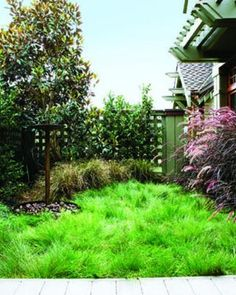 No-mow grasses. Some grasses can live on rainfall alone in their native Western ranges, and they need mowing just once or twice a year to keep tidy.   Get details and sources Sunset garden