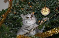 Med bara några dagar kvar till julafton kan det kännas som om att det är mycket som ska fixas. Men du ska se att det går bra. Sköna Hem har rådfrågat en grupp experter, som ger dig sina bästa tips inför julhelgen. Nu kan ingenting gå fel. GOD JUL!