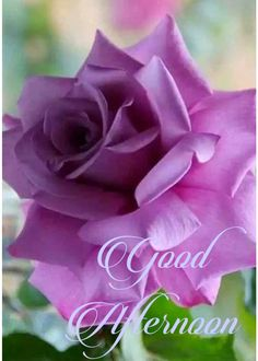 Afternoon Messages, Afternoon Prayer, Good Afternoon Quotes, Good Morning Cards, Good Day Quotes, Good Morning Good Night, Morning Greeting, Good Morning Quotes, Good Morning Beautiful Flowers