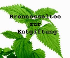 Brennesseltee Entgiftung
