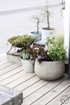 KUKKALA #kesäkukat #summerflowers Small Courtyard Gardens, Terrace Garden, Small Gardens, Garden Planters, Balcony Plants, Outdoor Plants, Outdoor Gardens, Outdoor Life, Scandinavian Style Home