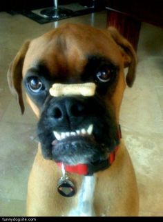 Boxer dogs. Nessa does this sometimes--must be a common thing.
