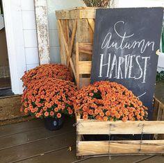 Decoración de otoño - tardor - autumn deco - decoration