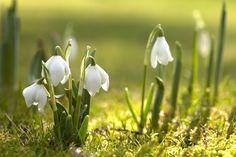 Photos of spring 01