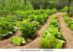 9 Brisk Cool Tips: Backyard Garden Diy backyard garden landscape tips and tricks. Small Backyard Gardens, Backyard Garden Design, Large Backyard, Fun Backyard, Raised Gardens, Rustic Backyard, Garden Fun, Modern Backyard, Garden Seeds