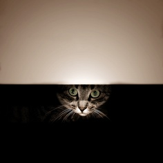 MisKet is Hiding by E.L.A, via Flickr