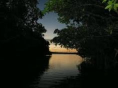 Heading thru mangroves to get to Lagoon... Can't wait!
