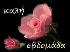 Happy New Week, Mom And Dad, Good Morning, Cross Stitch, Thankful, Rose, Flowers, Plants, Gifs