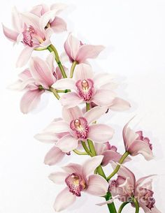 Pink Cymbidium orchid artwork. Would look great in a soft romantic bedroom.: