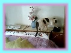 Cutest Cat Compilation!