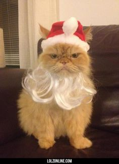 Santa never looked so angry…#funny #lol #lolzonline