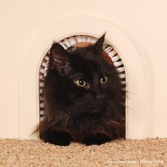 Just ordered this silly little cat hole as a last ditch effort to keep the litter box out of site and the dogs out of the litter box!