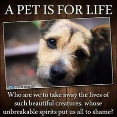 Pets are not disposable toys that you throw away when they get old or aren't fun anymore or develop health issues or any of the hundreds of reasons people abandon their pets. They are living, feeling beings who are willing to love us unconditionally & don't ask much in return. If you don't want the kind of commitment having a pet requires, don't get one. They'd be better off without you.