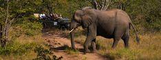 Kruger National Park Safaris - Affordable Lodges