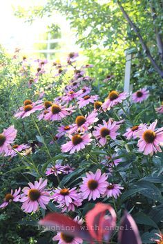 laughing with angels: views around the garden in August