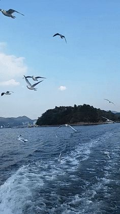 The most beautiful landscape photos animated Beautiful Gif, Beautiful Ocean, Beautiful Birds, Beautiful Beaches, Beautiful Pictures, Images Gif, Gif Pictures, Moving Pictures, Foto Gif