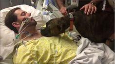 Dog visits dying owner in hospital to give heartbreaking goodbye