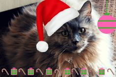 The Ultimate Gifts You Can Give Your Pets This Festive Season