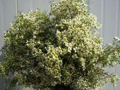 Wax flor