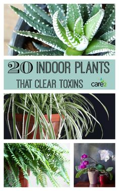 20 Houseplants That Clear Toxins From Your Home